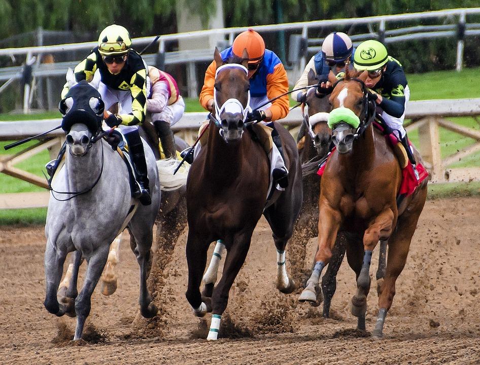 Sportwetten Pferdewetten